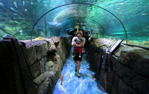 Sea Life London Aquarium Top 10 Fun places for Kids in London