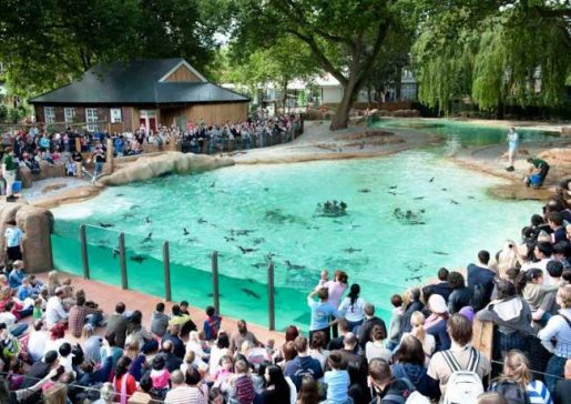 ZSL London Zoo Top 10 Fun places for Kids in London
